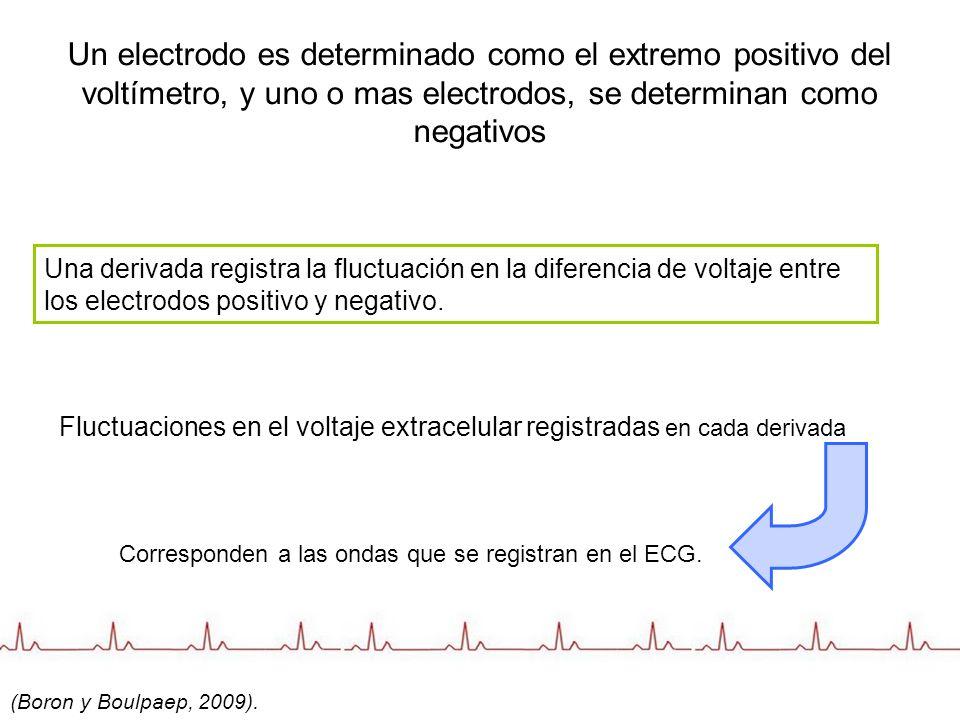 Un electrodo es determinado como el extremo positivo del voltímetro, y uno o mas electrodos, se determinan como negativos Una derivada registra la flu