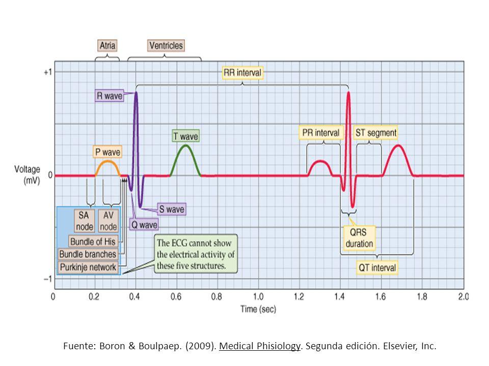 Fuente: Boron & Boulpaep. (2009). Medical Phisiology. Segunda edición. Elsevier, Inc.