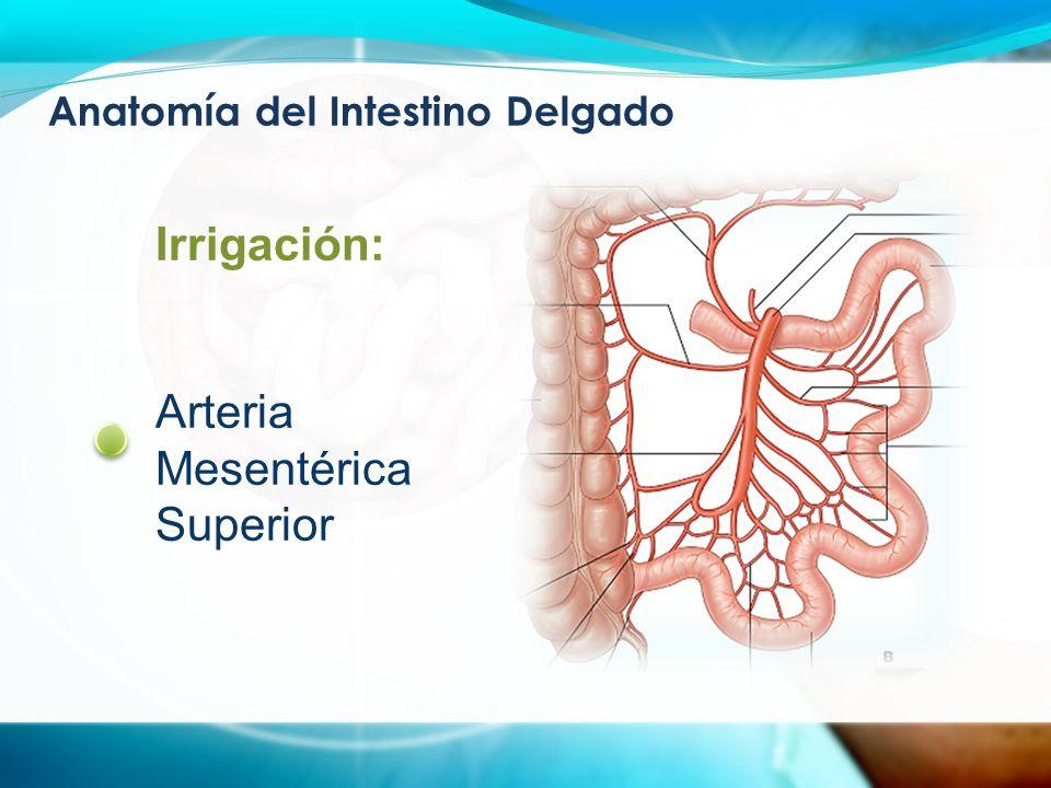 Vistoso Anatomía Del Intestino Delgado Y Grueso Inspiración ...
