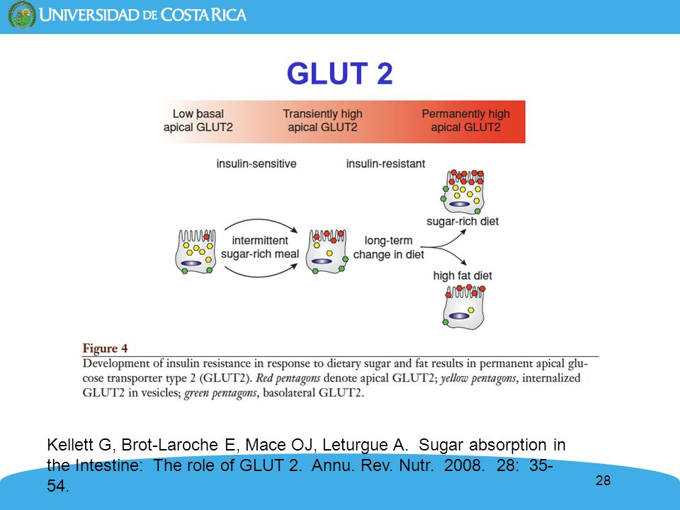 28 GLUT 2 Kellett G, Brot-Laroche E, Mace OJ, Leturgue A. Sugar absorption in the Intestine: The role of GLUT 2. Annu. Rev. Nutr. 2008. 28: 35- 54.