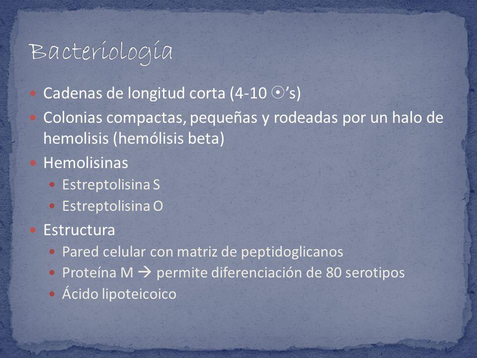 Cadenas de longitud corta (4-10 s) Colonias compactas, pequeñas y rodeadas por un halo de hemolisis (hemólisis beta) Hemolisinas Estreptolisina S Estr