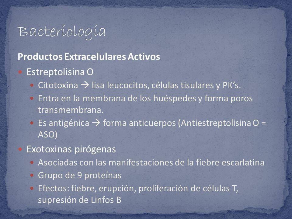 Productos Extracelulares Activos Estreptolisina O Citotoxina lisa leucocitos, células tisulares y PKs. Entra en la membrana de los huéspedes y forma p