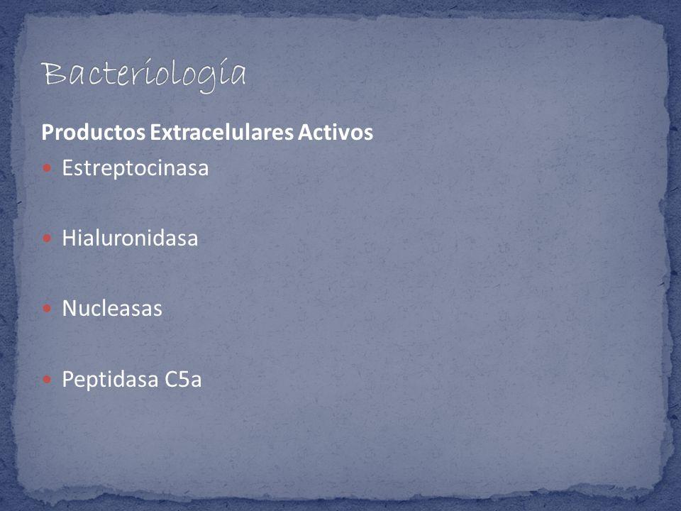 Productos Extracelulares Activos Estreptocinasa Hialuronidasa Nucleasas Peptidasa C5a