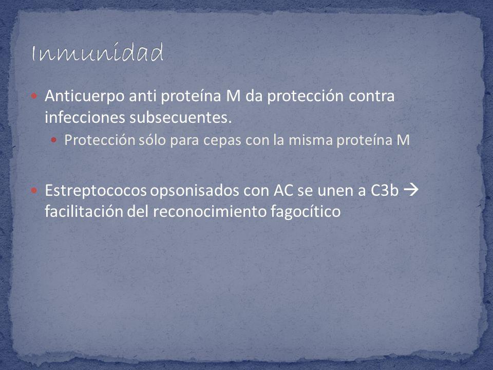 Anticuerpo anti proteína M da protección contra infecciones subsecuentes. Protección sólo para cepas con la misma proteína M Estreptococos opsonisados