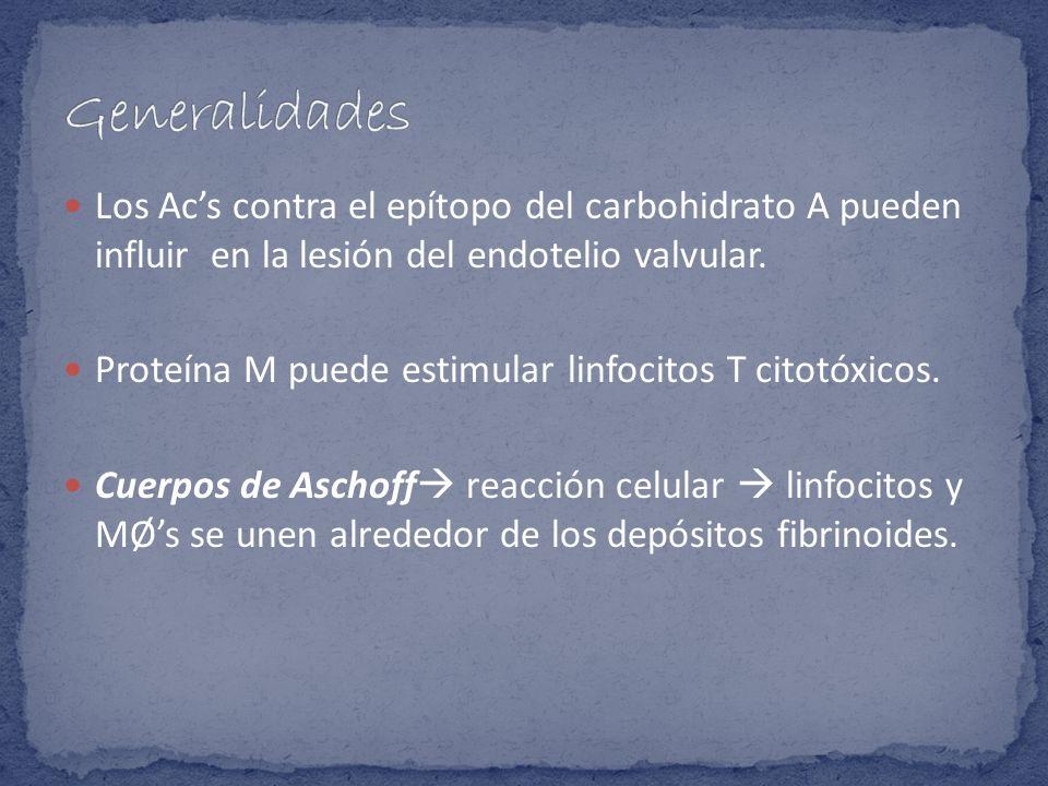 Los Acs contra el epítopo del carbohidrato A pueden influir en la lesión del endotelio valvular. Proteína M puede estimular linfocitos T citotóxicos.