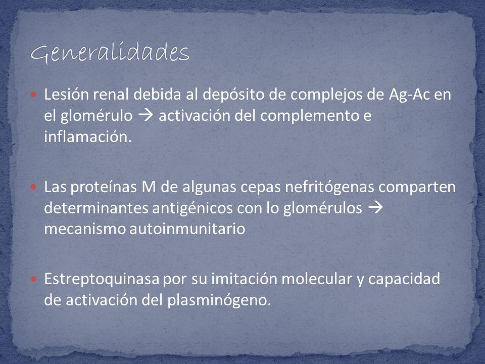 Lesión renal debida al depósito de complejos de Ag-Ac en el glomérulo activación del complemento e inflamación. Las proteínas M de algunas cepas nefri