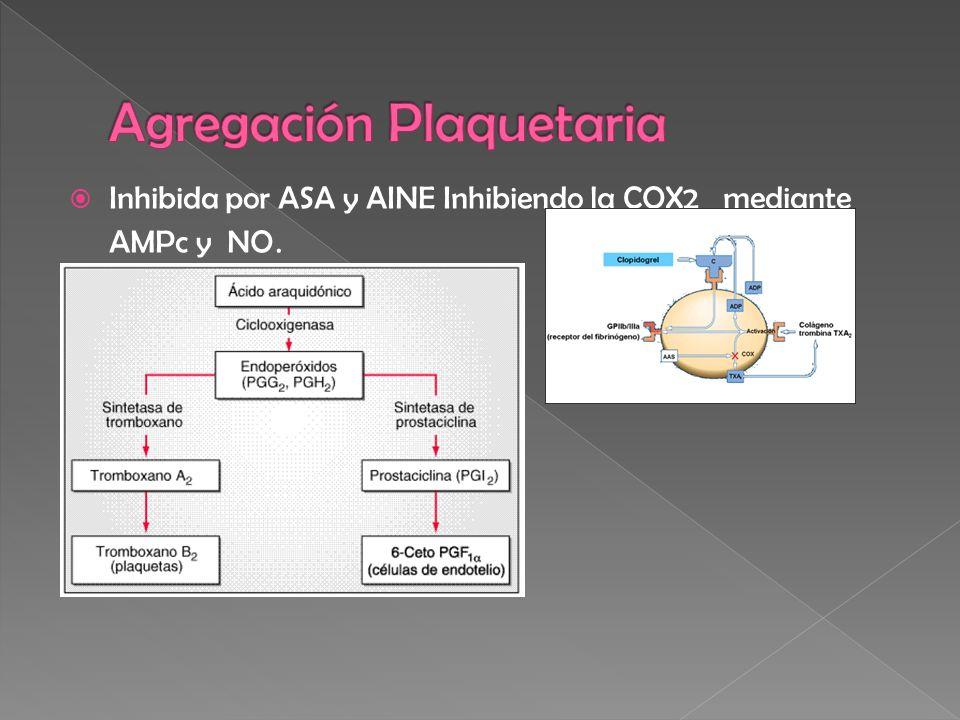 Inhibida por ASA y AINE Inhibiendo la COX2 mediante AMPc y NO.