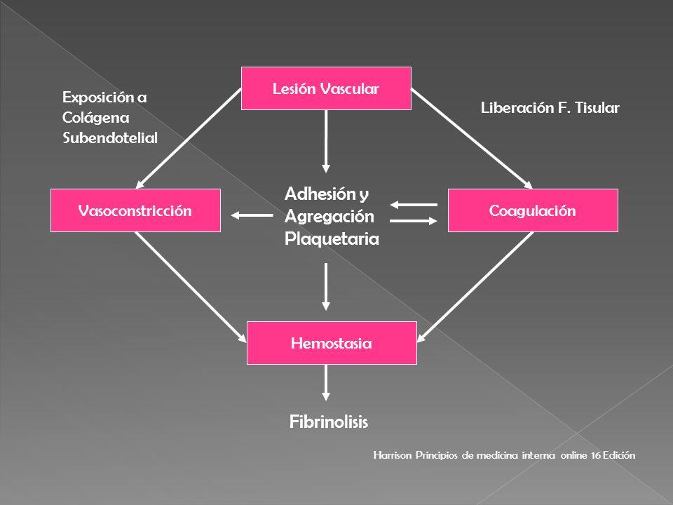 Lesión Vascular Vasoconstricción Hemostasia Coagulación Fibrinolisis Adhesión y Agregación Plaquetaria Exposición a Colágena Subendotelial Liberación