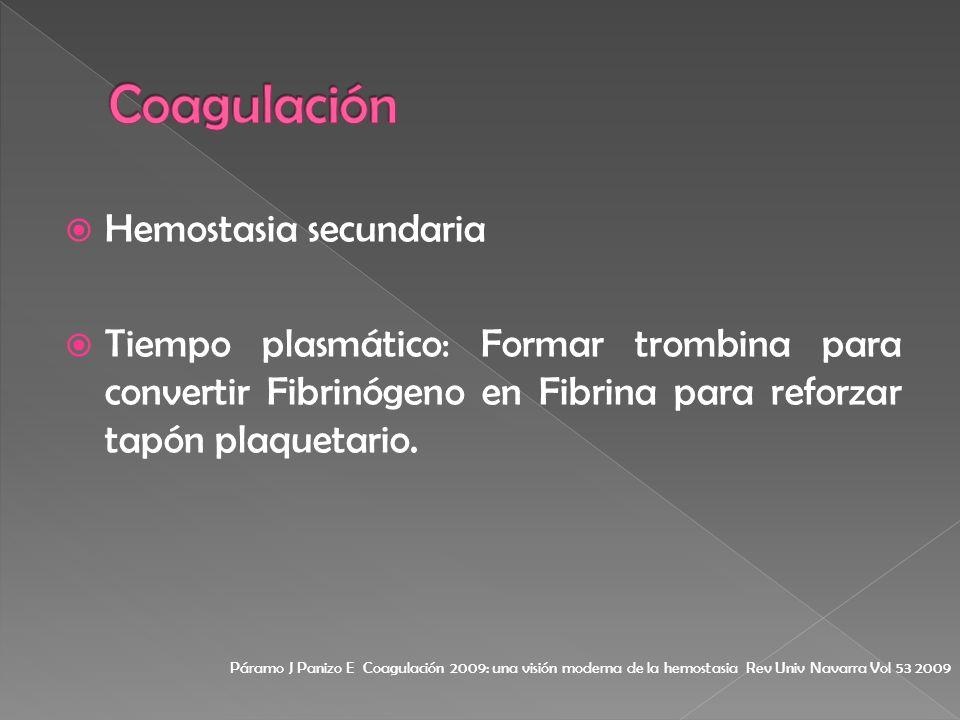 Hemostasia secundaria Tiempo plasmático: Formar trombina para convertir Fibrinógeno en Fibrina para reforzar tapón plaquetario. Páramo J Panizo E Coag