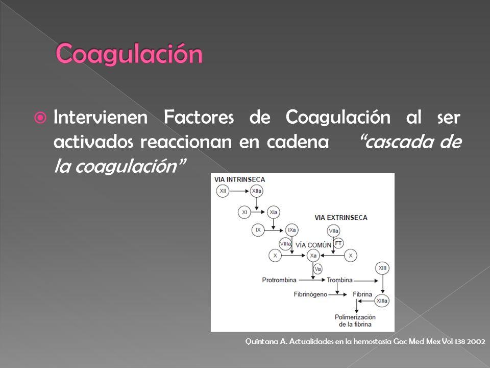 Intervienen Factores de Coagulación al ser activados reaccionan en cadena cascada de la coagulación Quintana A. Actualidades en la hemostasia Gac Med