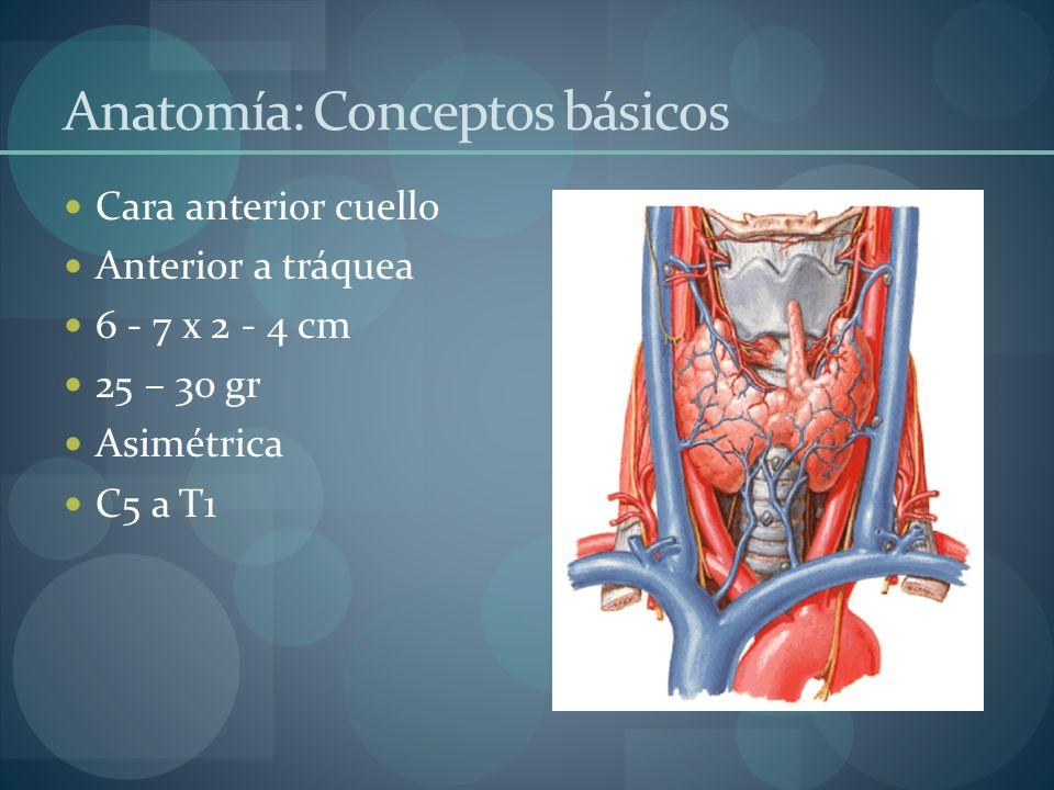 Anatomía: Conceptos básicos Cara anterior cuello Anterior a tráquea 6 - 7 x 2 - 4 cm 25 – 30 gr Asimétrica C5 a T1
