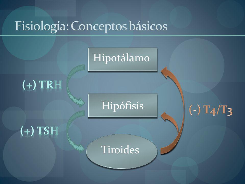 Hipotálamo Hipófisis Tiroides Fisiología: Conceptos básicos