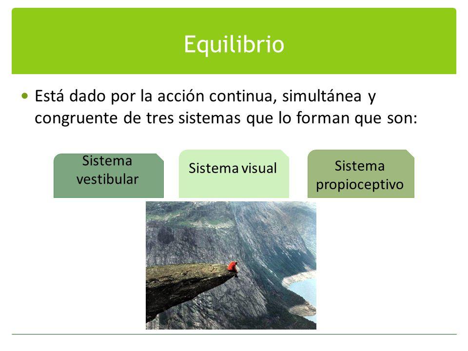 Equilibrio Está dado por la acción continua, simultánea y congruente de tres sistemas que lo forman que son: Sistema vestibular Sistema visual Sistema