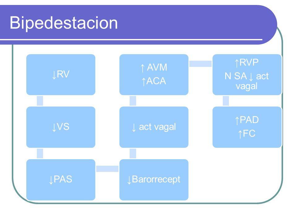 Bipedestacion RVVSPASBarorrecept act vagal AVM ACA RVP N SA act vagal PAD FC