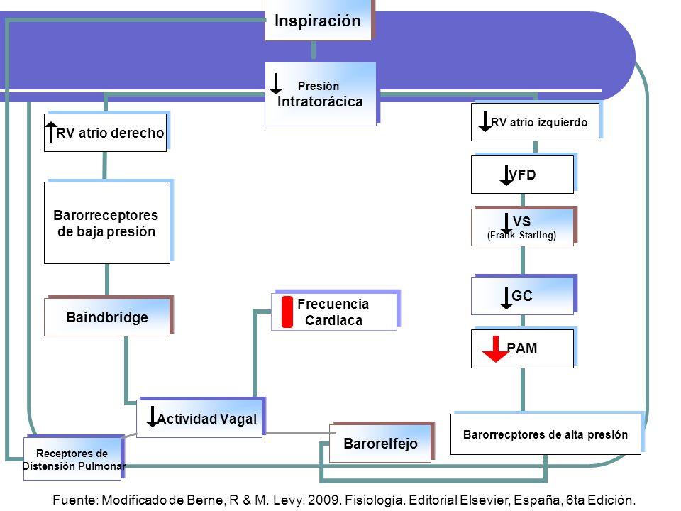 Receptores de Distensión Pulmonar Receptores de Distensión Pulmonar Fuente: Modificado de Berne, R & M. Levy. 2009. Fisiología. Editorial Elsevier, Es