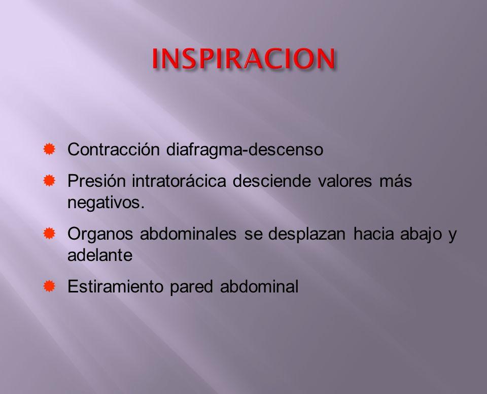 Contracción diafragma-descenso Presión intratorácica desciende valores más negativos. Organos abdominales se desplazan hacia abajo y adelante Estirami