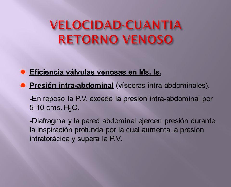 Eficiencia válvulas venosas en Ms. Is. Presión intra-abdominal (vísceras intra-abdominales). -En reposo la P.V. excede la presión intra-abdominal por