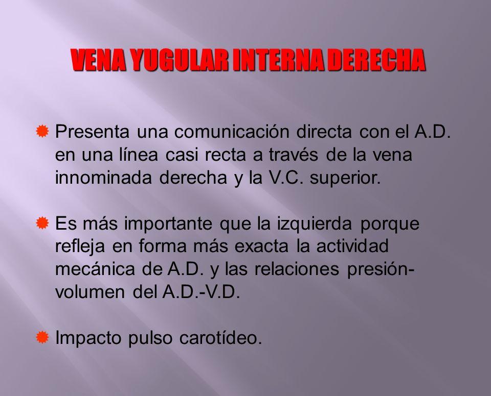 Presenta una comunicación directa con el A.D. en una línea casi recta a través de la vena innominada derecha y la V.C. superior. Es más importante que
