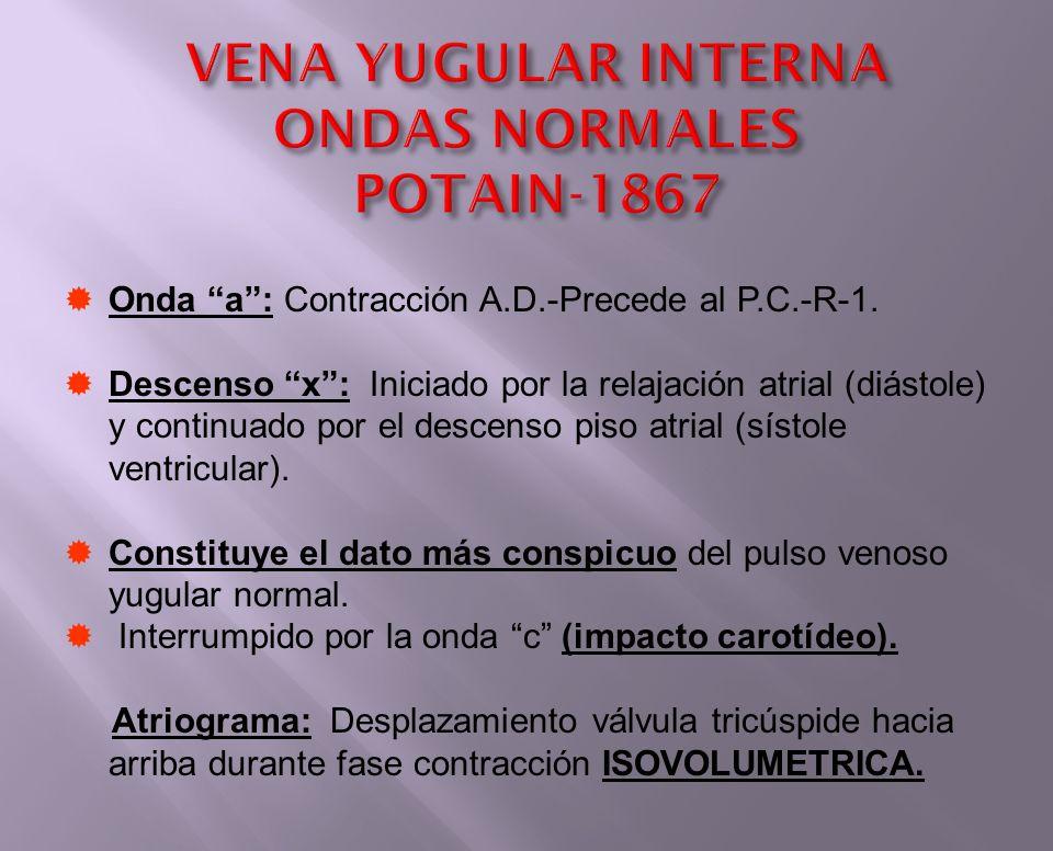 VENA YUGULAR INTERNA ONDAS NORMALES POTAIN-1867 Onda a: Contracción A.D.-Precede al P.C.-R-1. Descenso x: Iniciado por la relajación atrial (diástole)