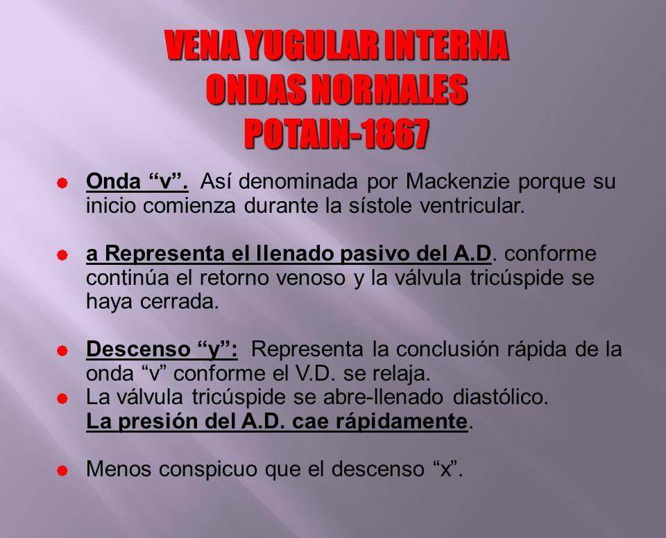 VENA YUGULAR INTERNA ONDAS NORMALES POTAIN-1867 Onda v. Así denominada por Mackenzie porque su inicio comienza durante la sístole ventricular. a Repre