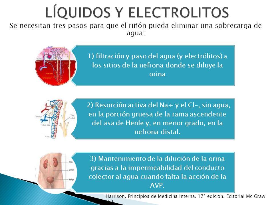 1) filtración y paso del agua (y electrólitos) a los sitios de la nefrona donde se diluye la orina 2) Resorción activa del Na+ y el Cl–, sin agua, en