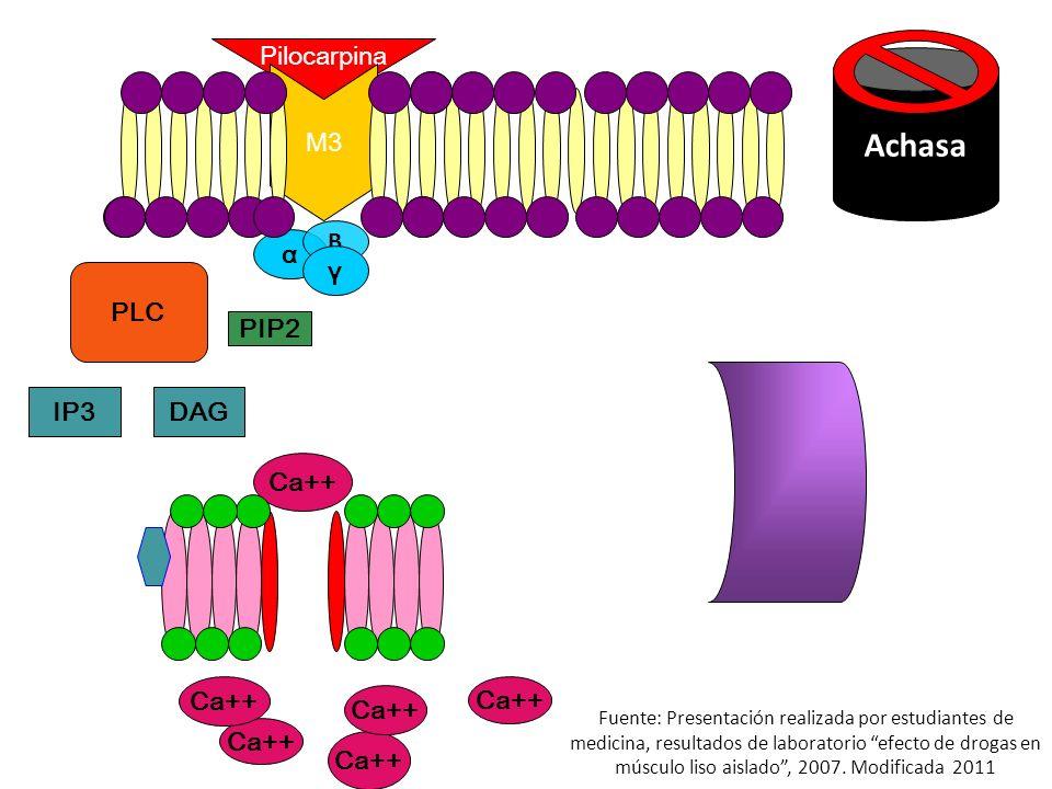 Pilocarpina M3 Ca++ α B γ PLC IP3DAG PIP2 Calmodulina Ca++ Achasa Fuente: Presentación realizada por estudiantes de medicina, resultados de laboratorio efecto de drogas en músculo liso aislado, 2007.