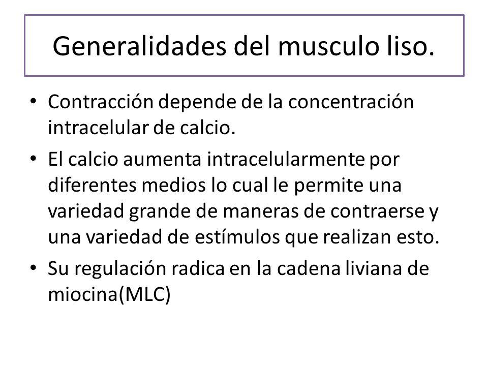 Generalidades del musculo liso.Contracción depende de la concentración intracelular de calcio.