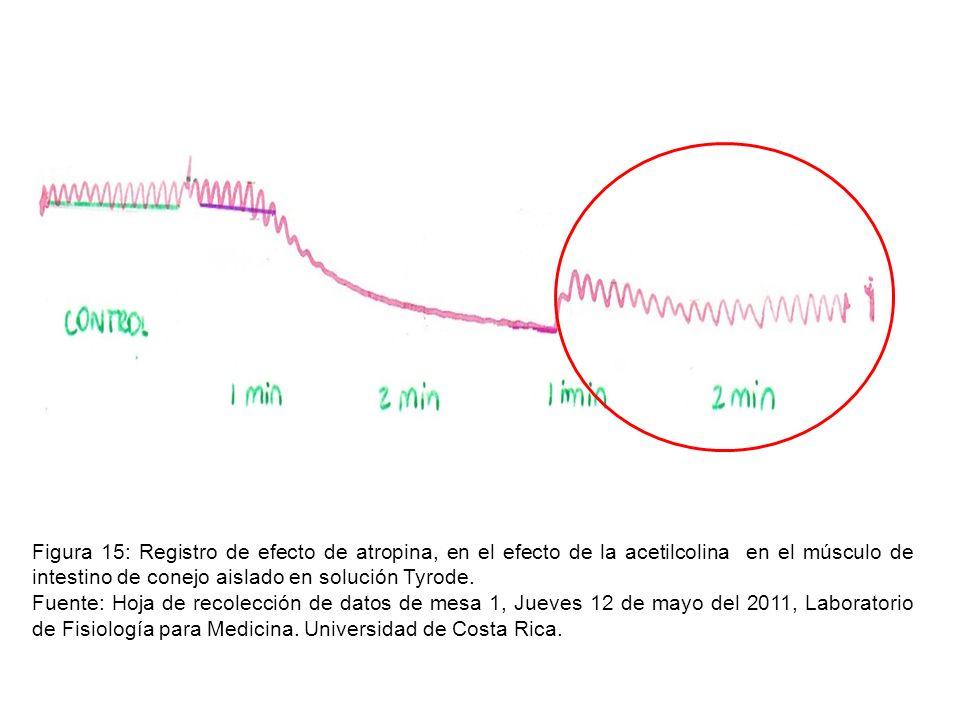 Figura 15: Registro de efecto de atropina, en el efecto de la acetilcolina en el músculo de intestino de conejo aislado en solución Tyrode.