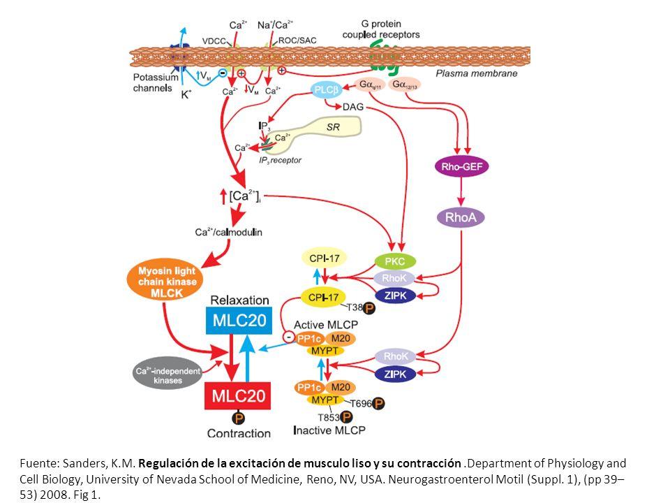 Control Inicial Figura 3.0: Registro de control sobre el músculo liso aislado de intestino de conejo en solución Tyrode.