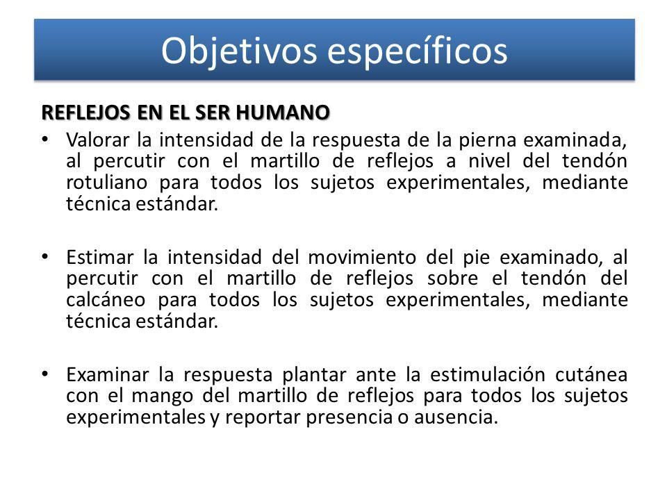 Objetivos específicos REFLEJOS EN EL SER HUMANO REFLEJOS EN EL SER HUMANO Valorar la intensidad de la respuesta de la pierna examinada, al percutir co