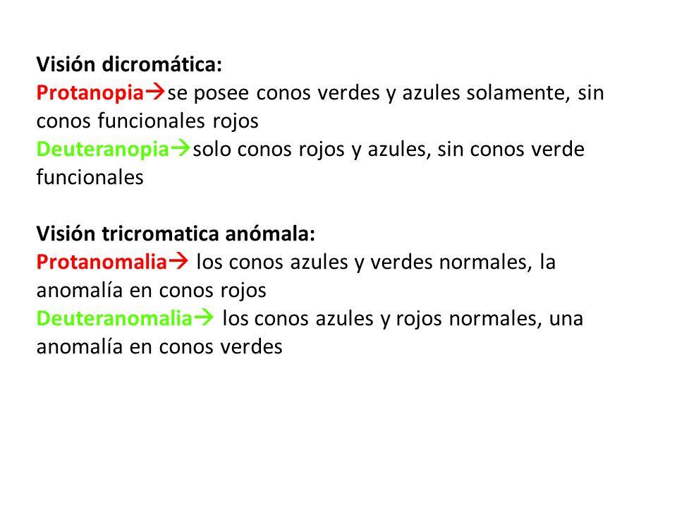 Visión dicromática: Protanopia se posee conos verdes y azules solamente, sin conos funcionales rojos Deuteranopia solo conos rojos y azules, sin conos