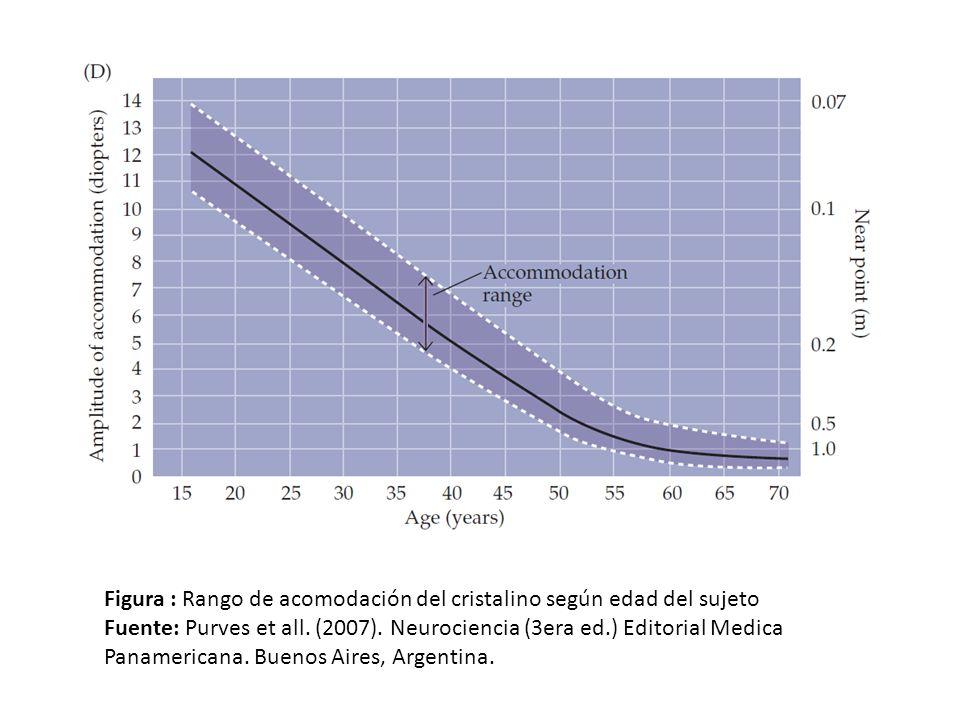 Figura : Rango de acomodación del cristalino según edad del sujeto Fuente: Purves et all. (2007). Neurociencia (3era ed.) Editorial Medica Panamerican