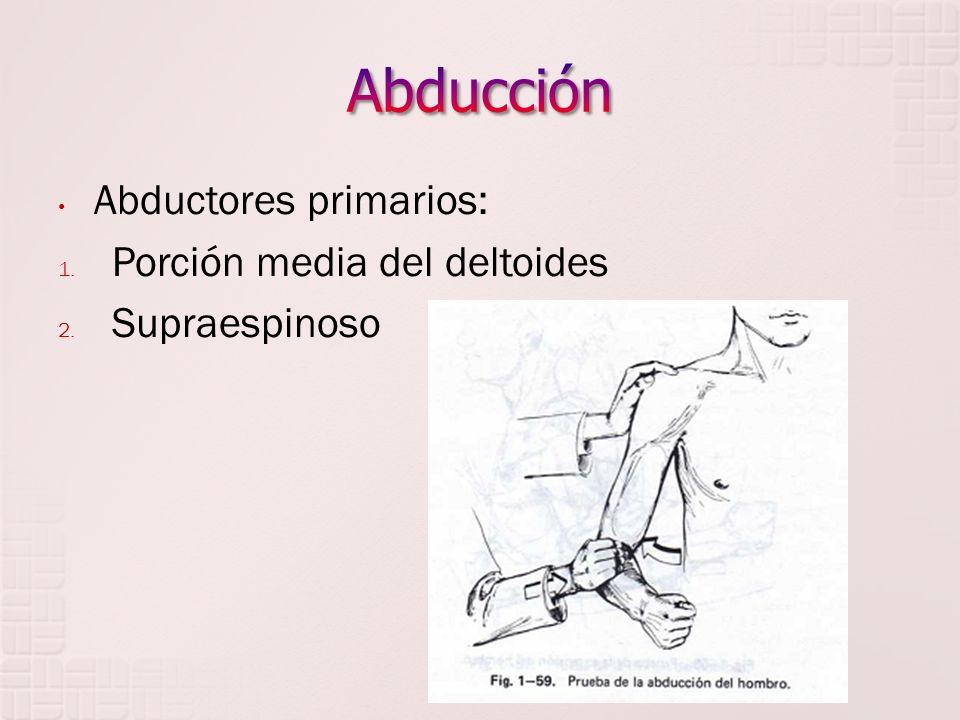 Abductores primarios: 1. Porción media del deltoides 2. Supraespinoso