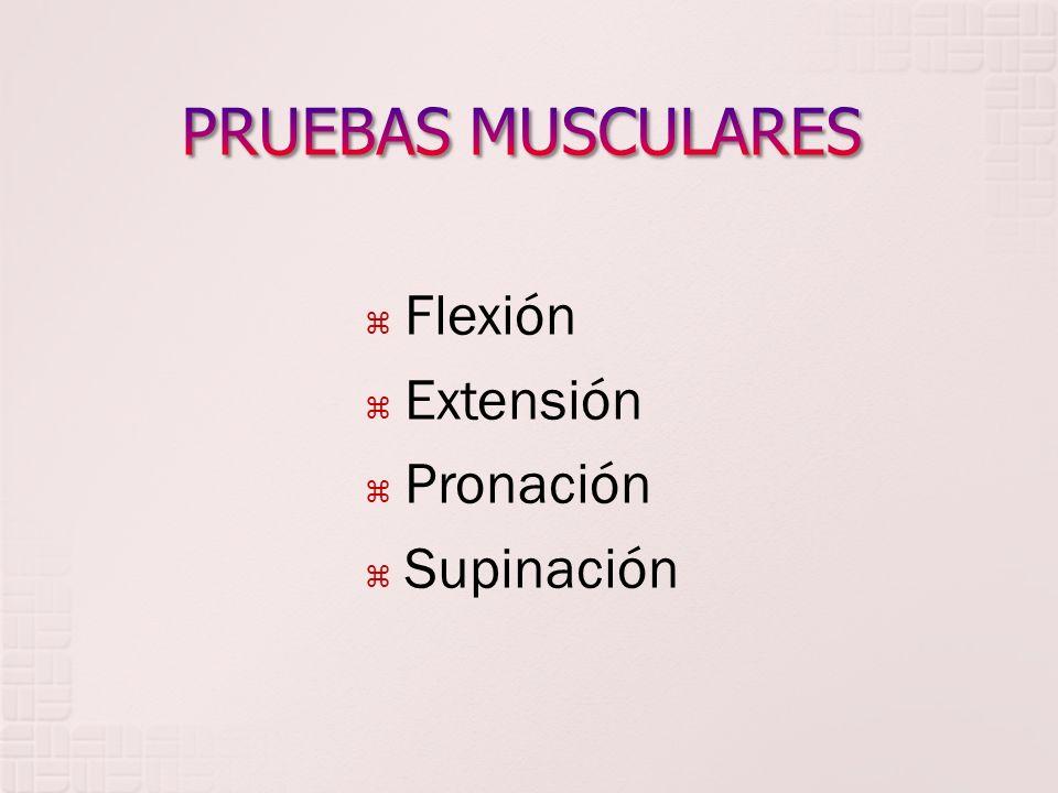 Flexión Extensión Pronación Supinación