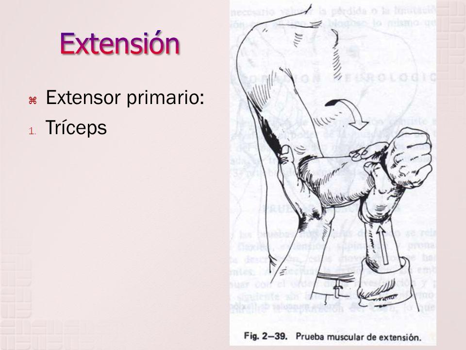 Extensor primario: 1. Tríceps