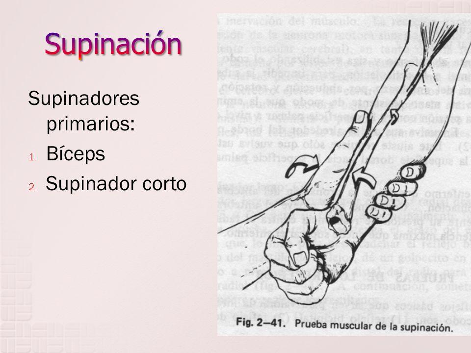 Supinadores primarios: 1. Bíceps 2. Supinador corto