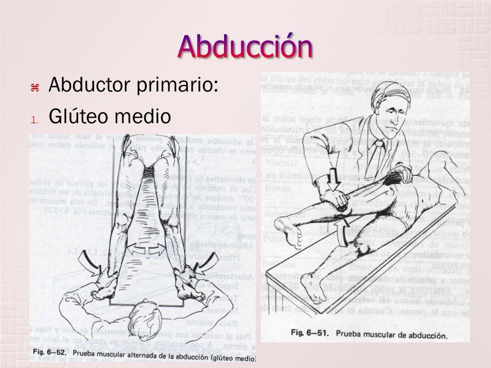 Abductor primario: 1. Glúteo medio