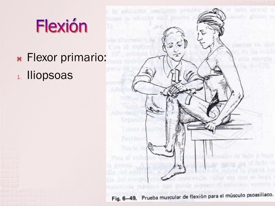 Flexor primario: 1. Iliopsoas
