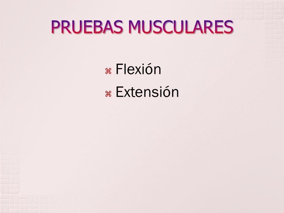 Flexión Extensión