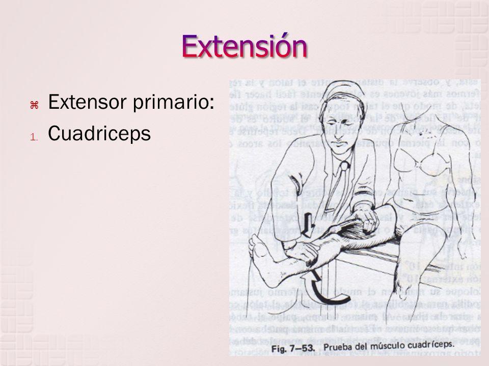 Extensor primario: 1. Cuadriceps