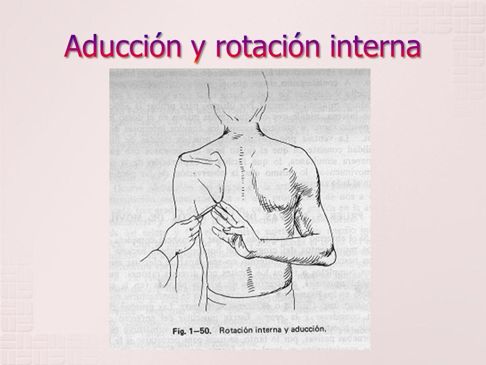 ARCOS DE MOVILIDAD Abarca 4 fases: 1.Flexión 2. Extensión 3.