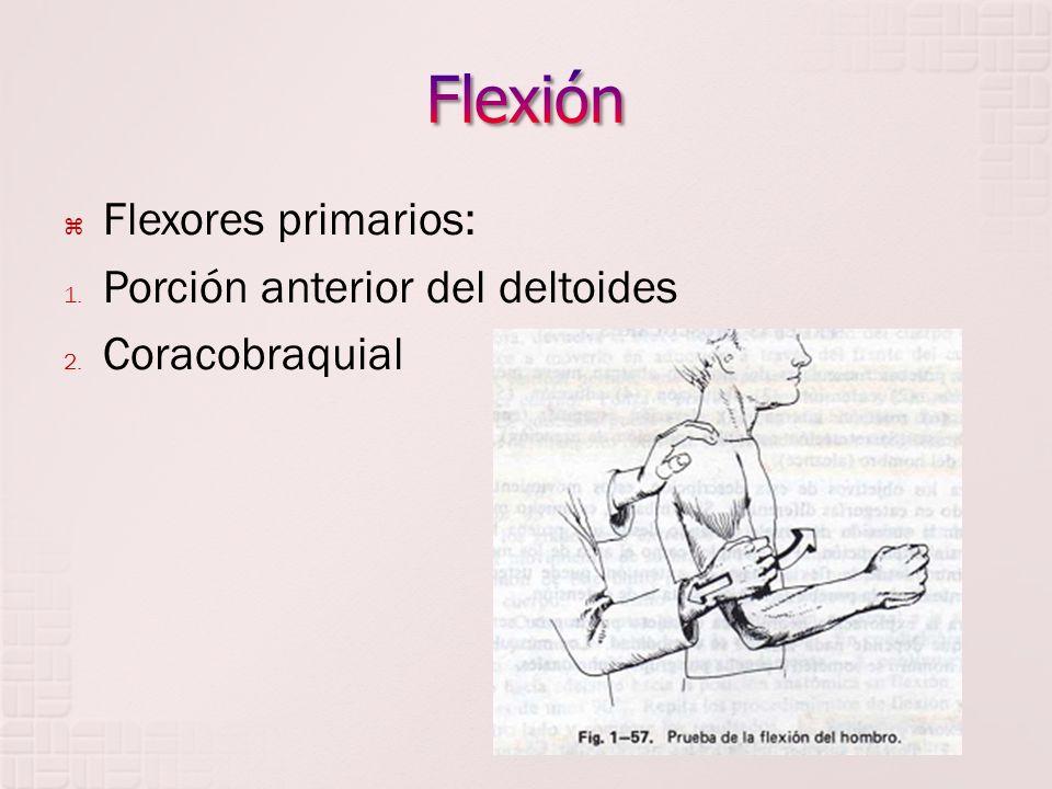 Flexores primarios: 1.Palmar mayor o flexor radial del carpo 2.