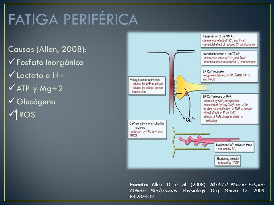 FATIGA PERIFÉRICA Causas (Allen, 2008): Fosfato inorgánico Lactato e H+ ATP y Mg+2 Glucógeno ROS Fuente: Allen, D. et al. (2008). Skeletal Muscle Fati