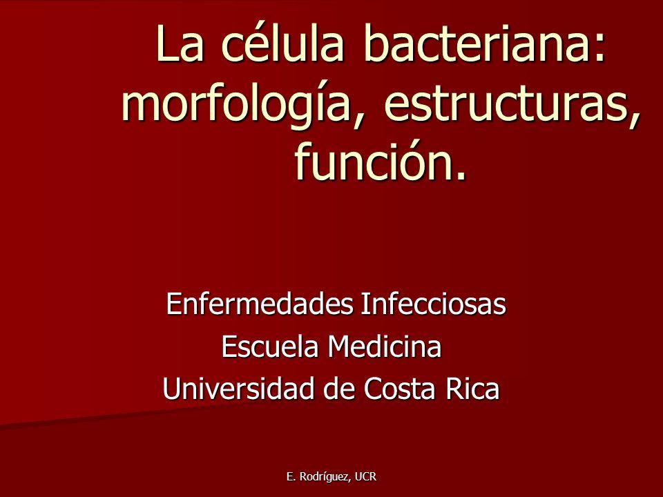 E. Rodríguez, UCR La célula bacteriana: morfología, estructuras, función. Enfermedades Infecciosas Enfermedades Infecciosas Escuela Medicina Universid