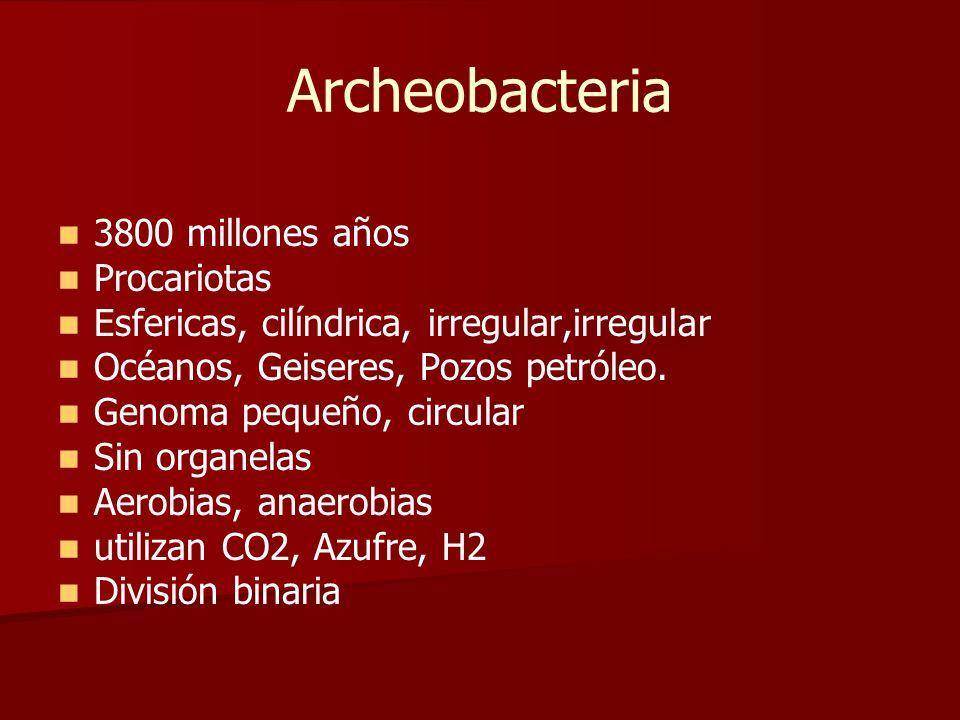 Archeobacteria 3800 millones años Procariotas Esfericas, cilíndrica, irregular,irregular Océanos, Geiseres, Pozos petróleo. Genoma pequeño, circular S