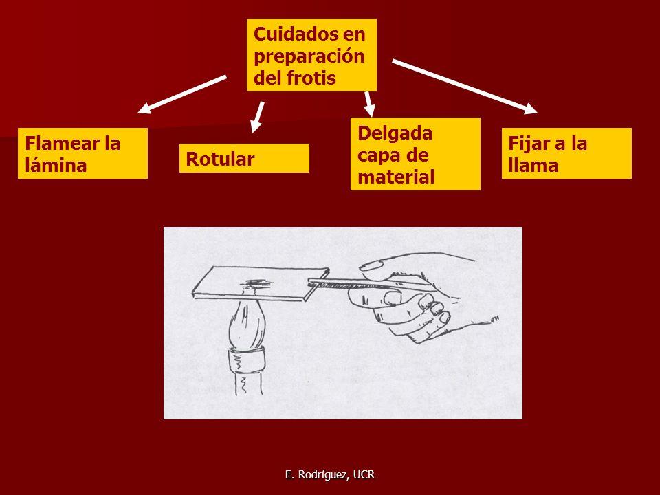 E. Rodríguez, UCR Cuidados en preparación del frotis Flamear la lámina Rotular Delgada capa de material Fijar a la llama