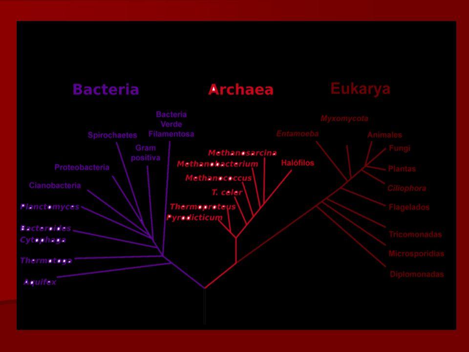 E. Rodríguez, UCR Agrupaciones De los bacilos