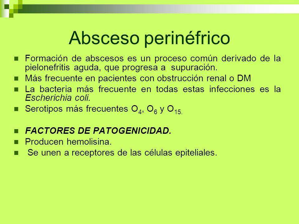 Absceso perinéfrico Formación de abscesos es un proceso común derivado de la pielonefritis aguda, que progresa a supuración. Más frecuente en paciente