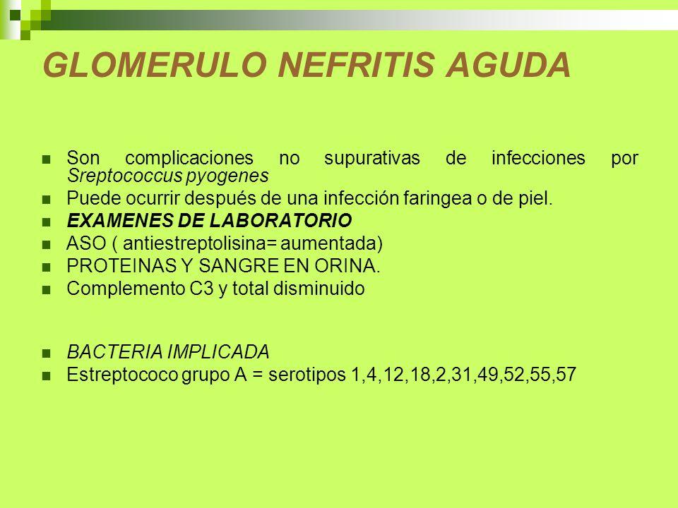 GLOMERULO NEFRITIS AGUDA Son complicaciones no supurativas de infecciones por Sreptococcus pyogenes Puede ocurrir después de una infección faringea o