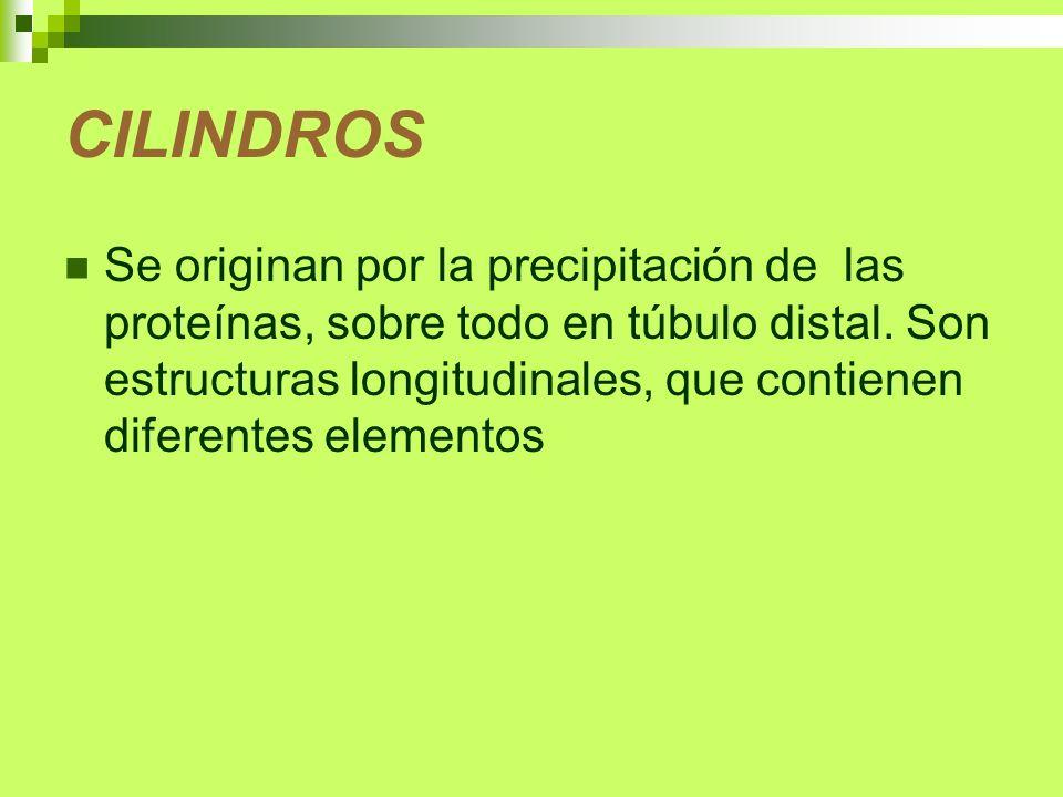 CILINDROS Se originan por la precipitación de las proteínas, sobre todo en túbulo distal. Son estructuras longitudinales, que contienen diferentes ele